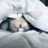 ぬくぬくする猫