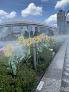 東京ドームシティプリズムホールで仮面ライダーショー