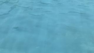 【こどもの国】プール