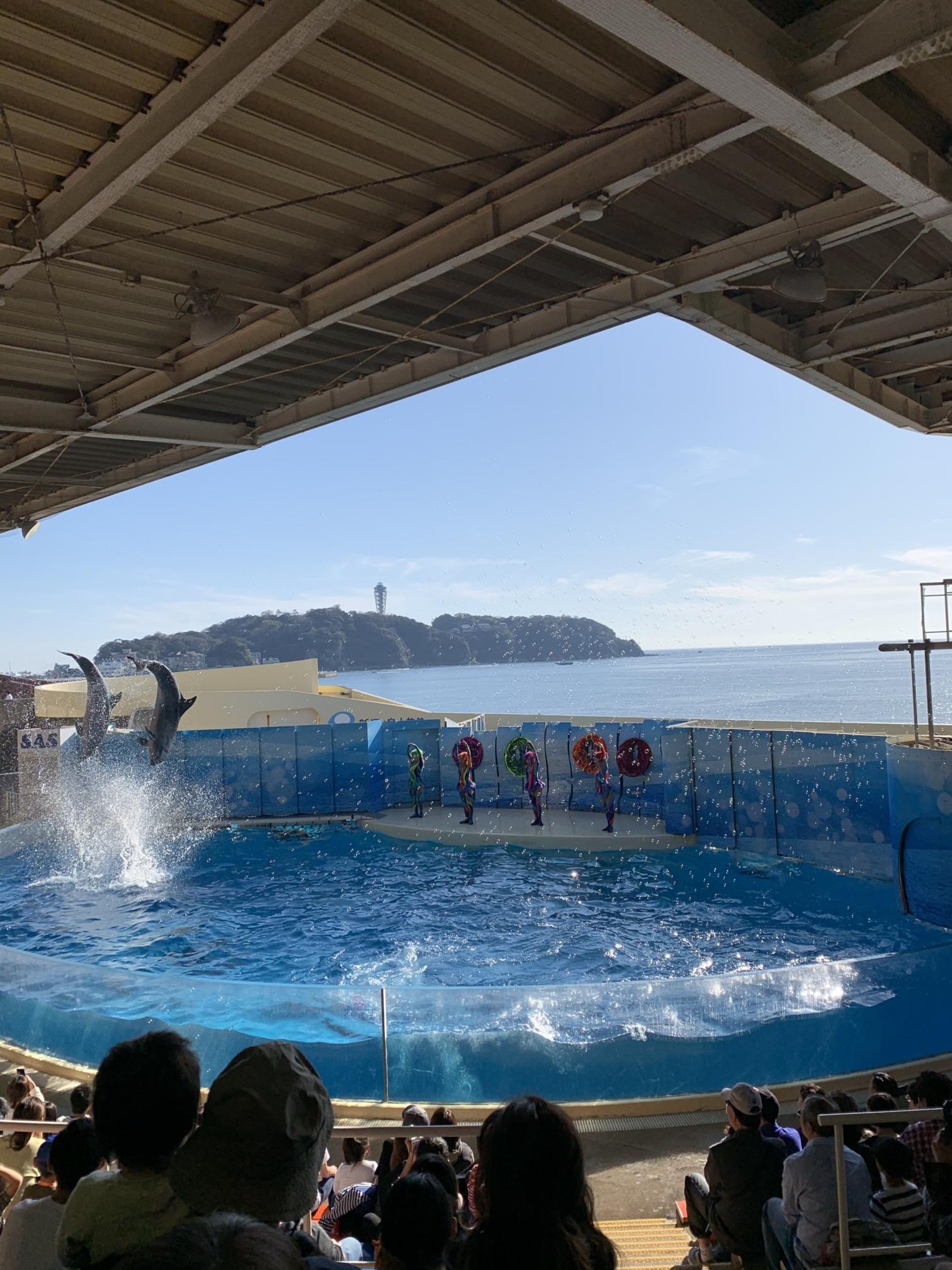 江の島水族館のイルカショーでジャンプ