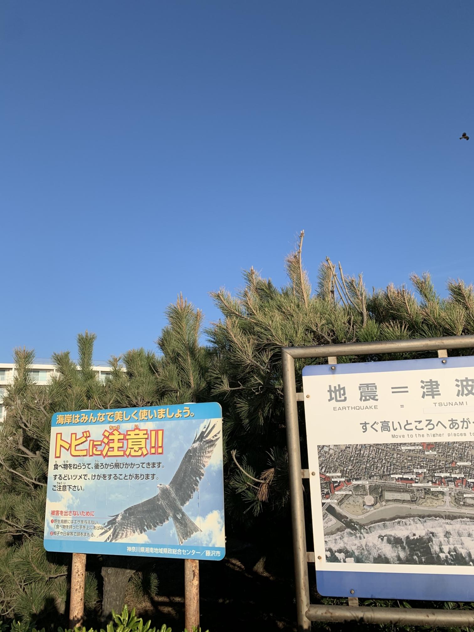 湘南海岸にあるトンビの注意喚起看板