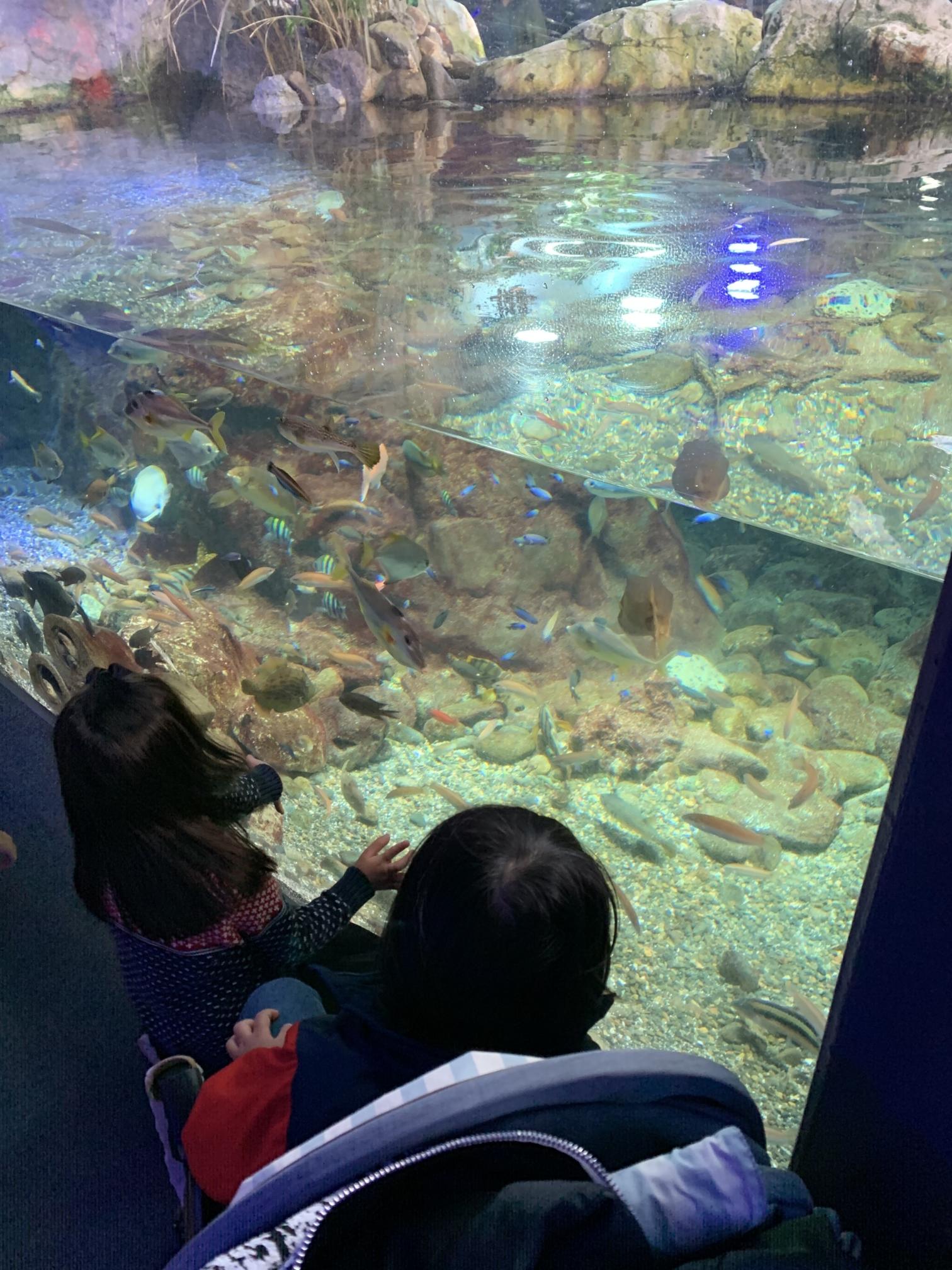 江の島水族館の相模湾ゾーン