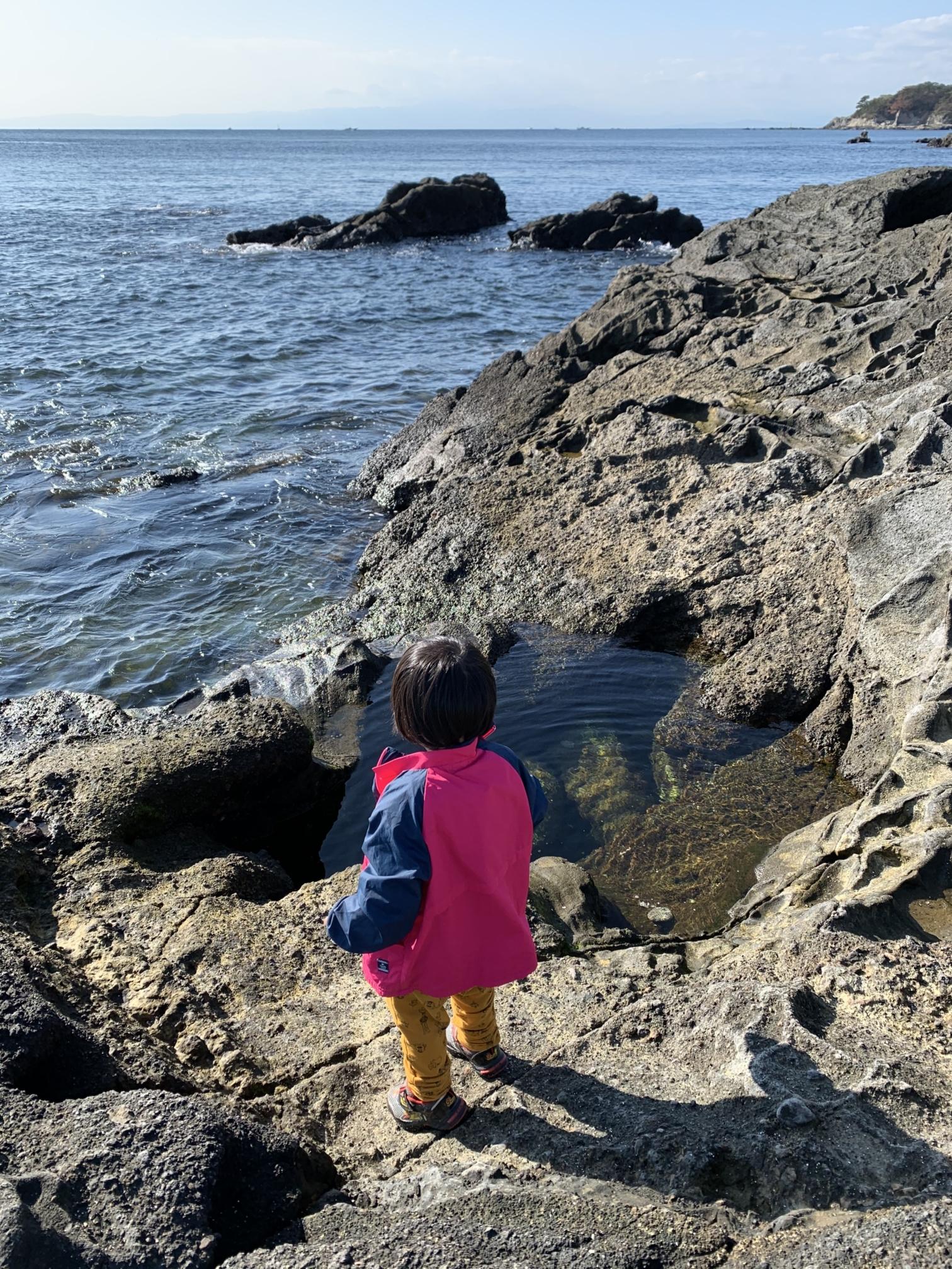 【ソレイユの丘】潮の引いた穴ぼこにお魚